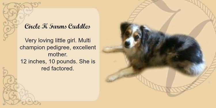 Cuddles.jpg