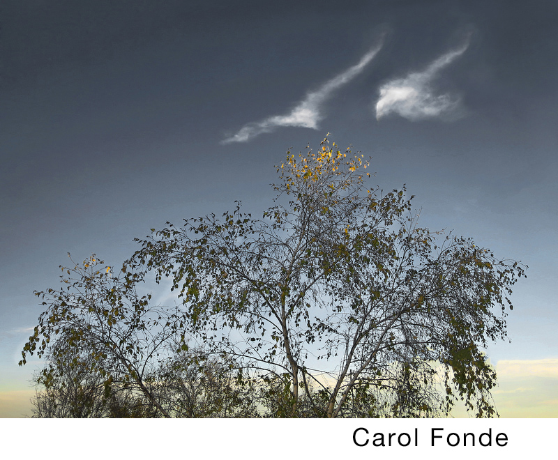 Fonde, Carol.jpg
