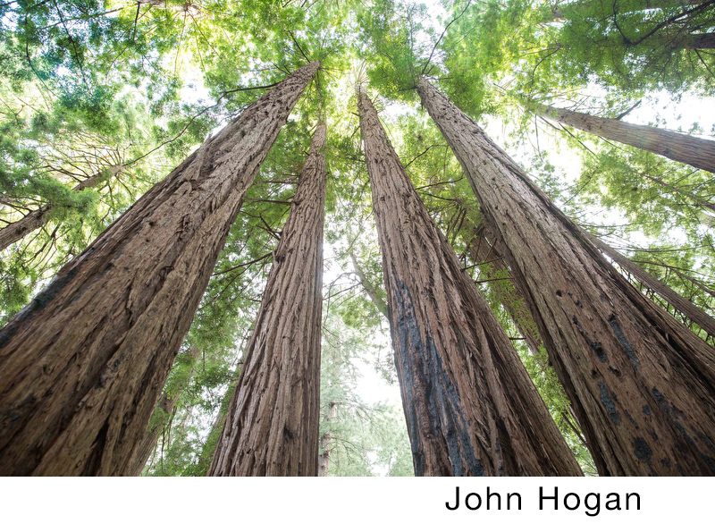 Hogan, John.jpg