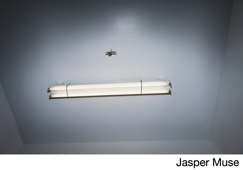 Muse, Jasper.jpg