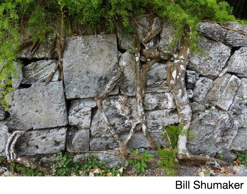 Shumaker, Bill.jpg