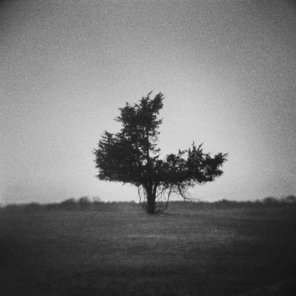 3_4_tree2.jpg