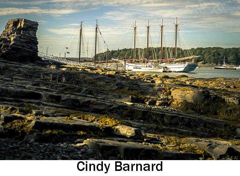Barnard_Cindy.jpg