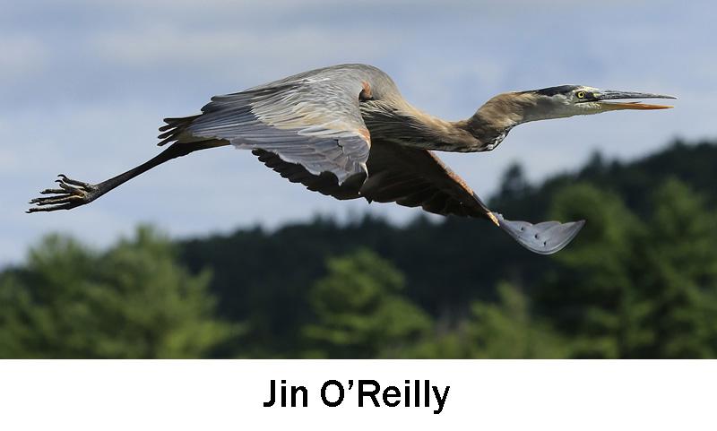 O'Reilly_Jim.jpg