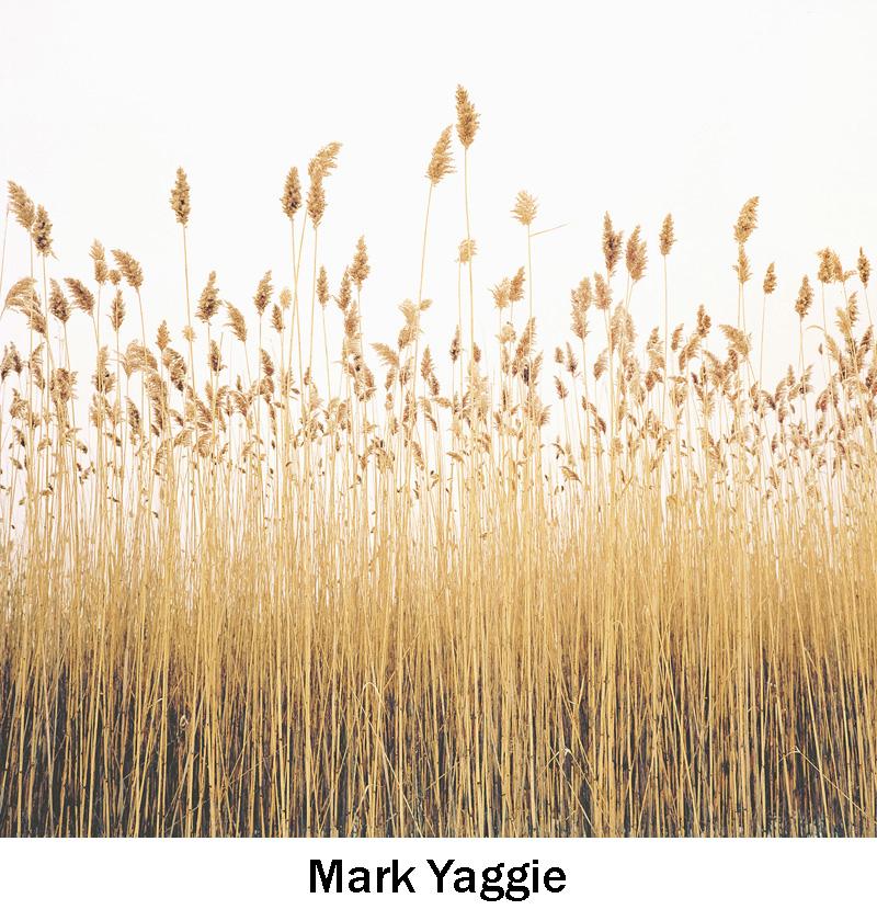 Yaggie_Mark.jpg