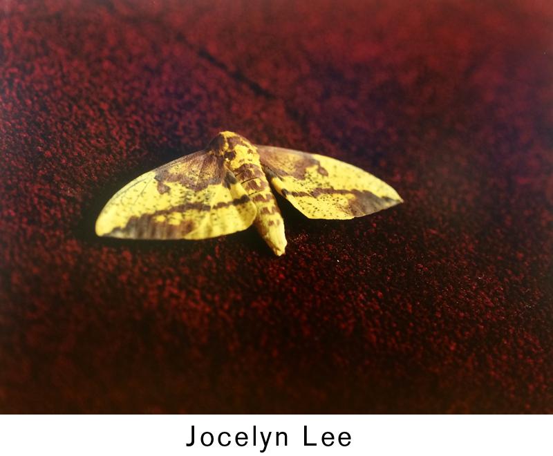 Lee_Jocelyn_type.jpg