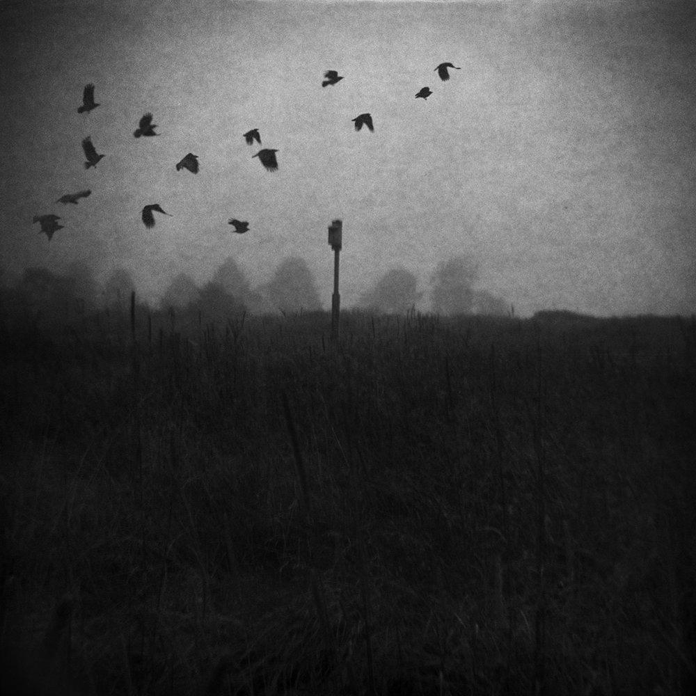 audubon_birds.jpg