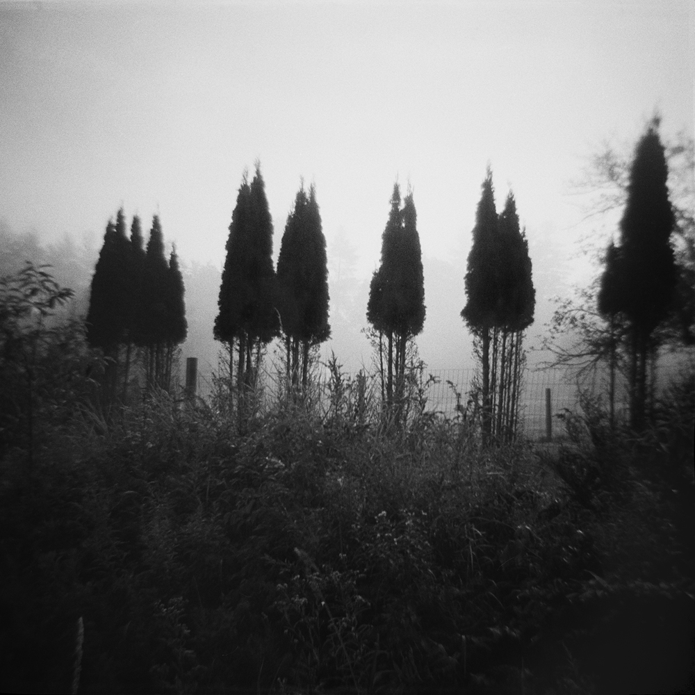 20 Untitled (deer-eaten bushes).jpg