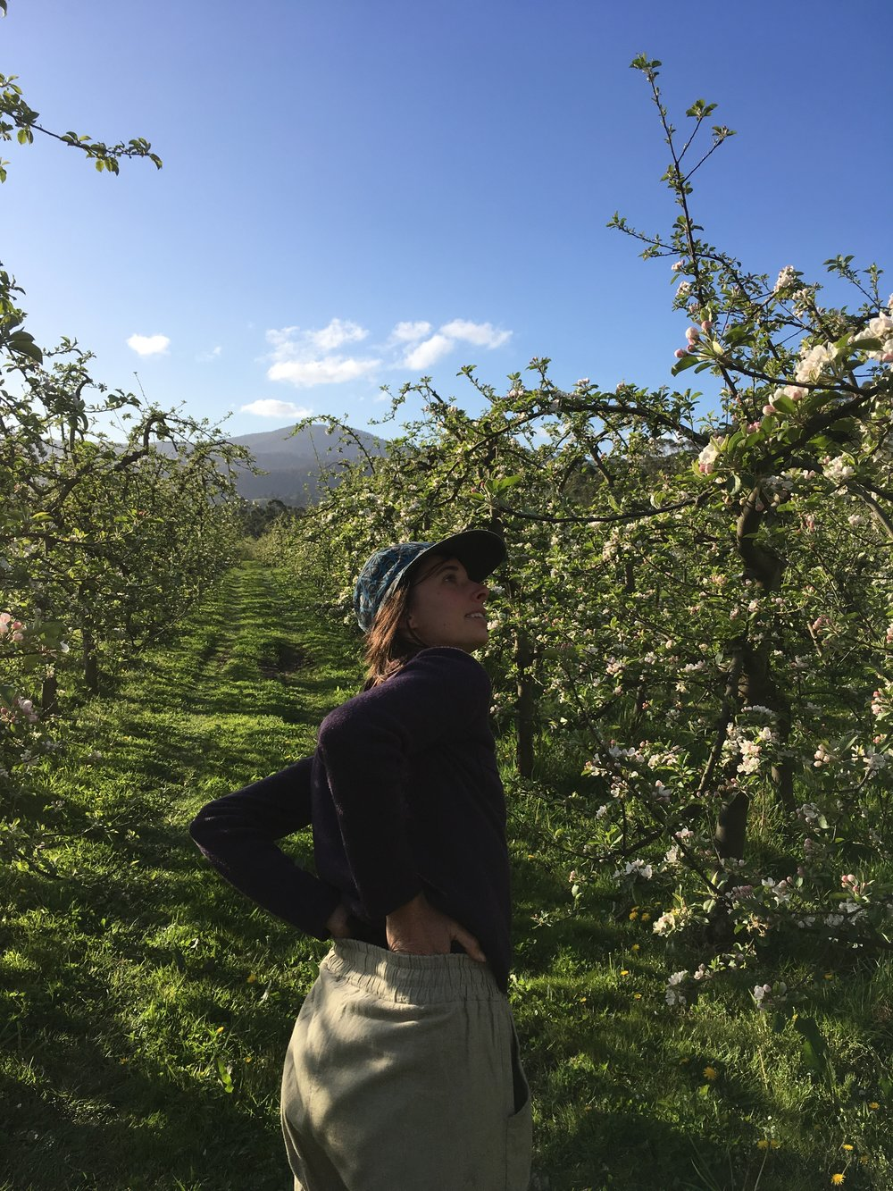 Pollination in Tasmanian fruit crops and market gardens - This project aims to develop an understanding of which insect pollinators play key roles in agricultural pollination networks in apple, blueberry and market gardens.