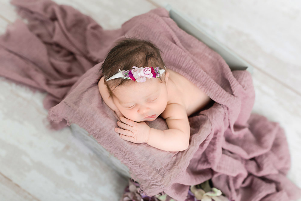 Easton Newborn Photographer Mauve