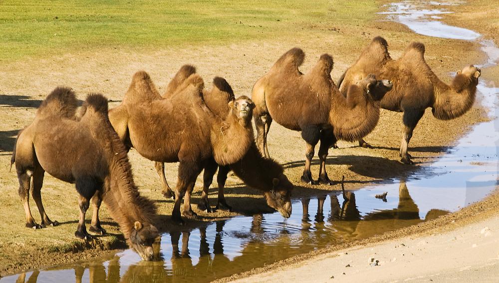 Oasis in Gobi Desert, Mongolia