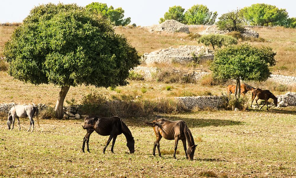 Near Ragusa, Sicily