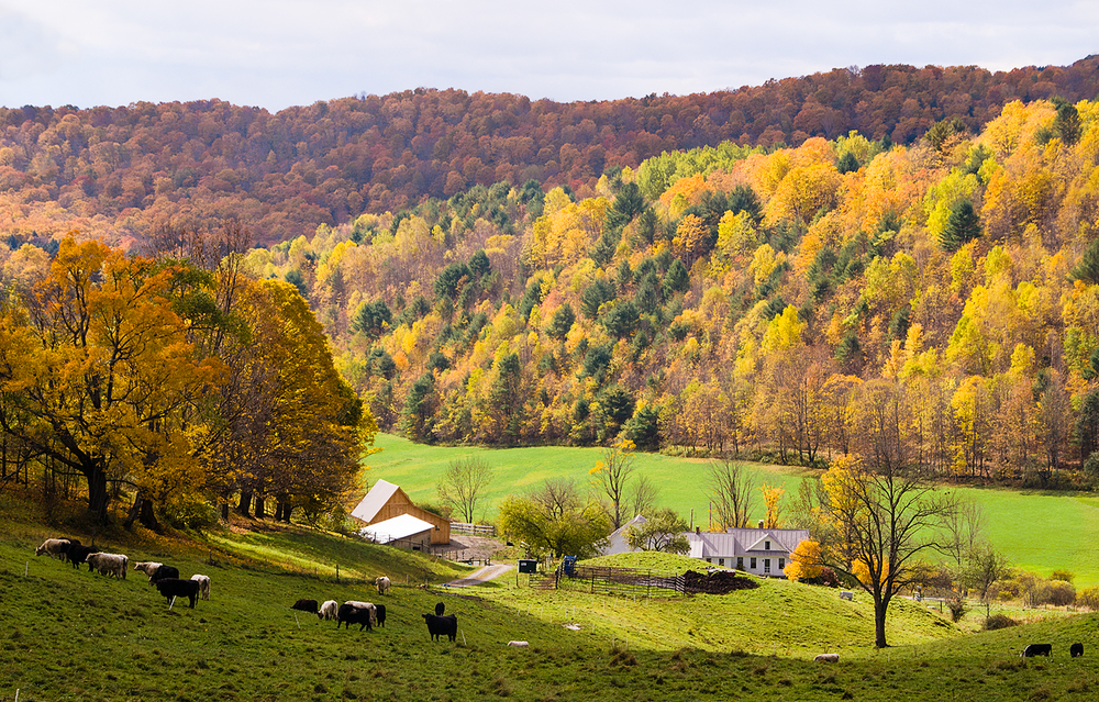 Autumn glory, Vermont