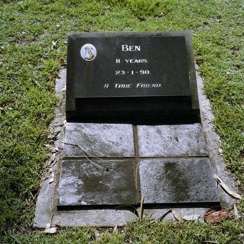 Pet Cemetery (2006)