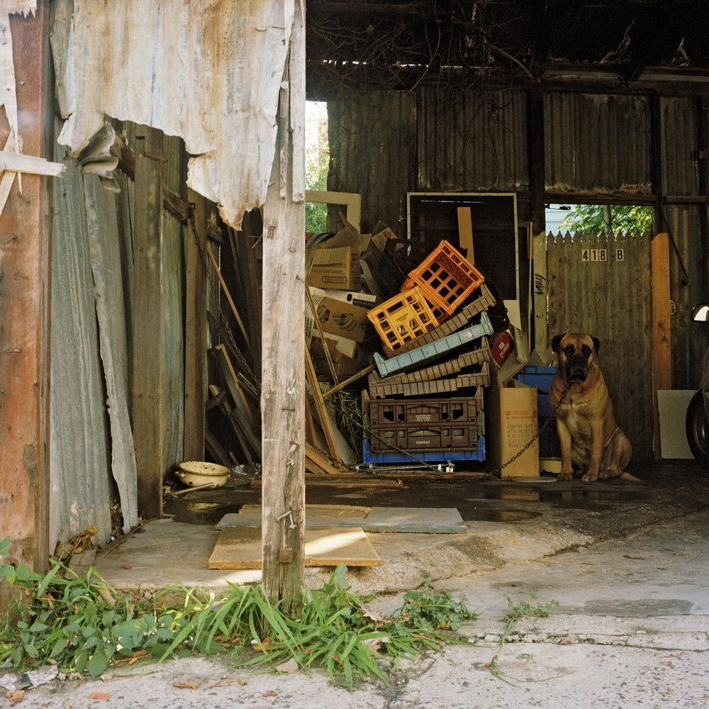 Dog in Garage (2000)