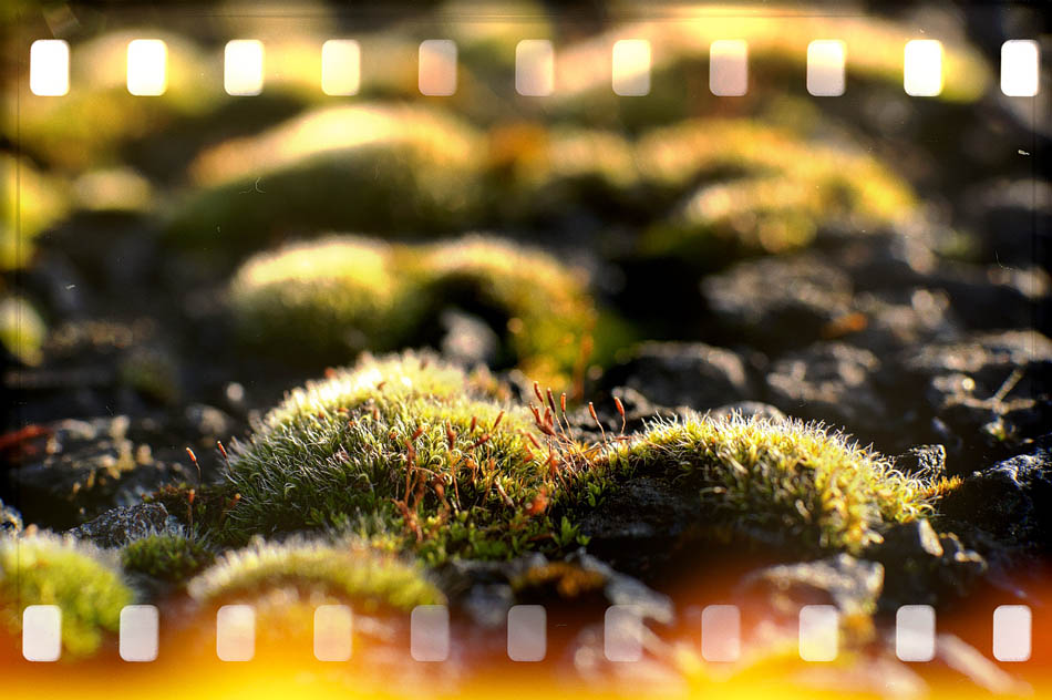 Closeup of Moss
