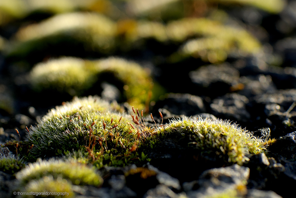 Some Moss taken with an old Nikon 105mm Macro