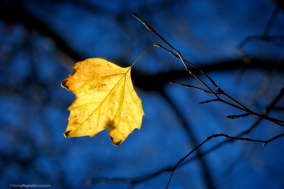 Leaf on Blue