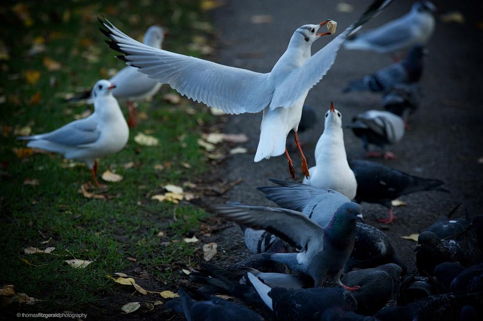 Bird grabbing cracker