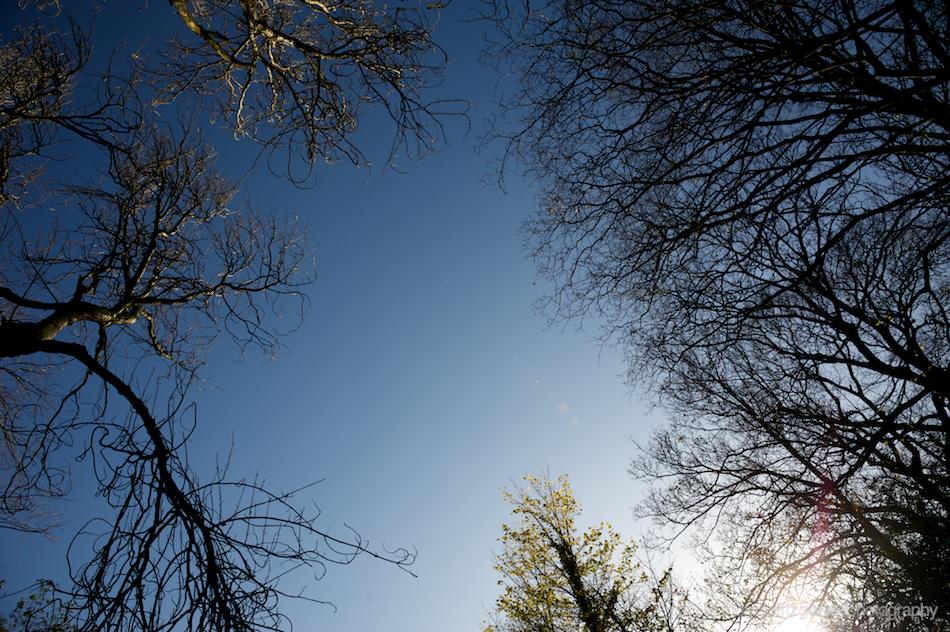 Winter Treees 09