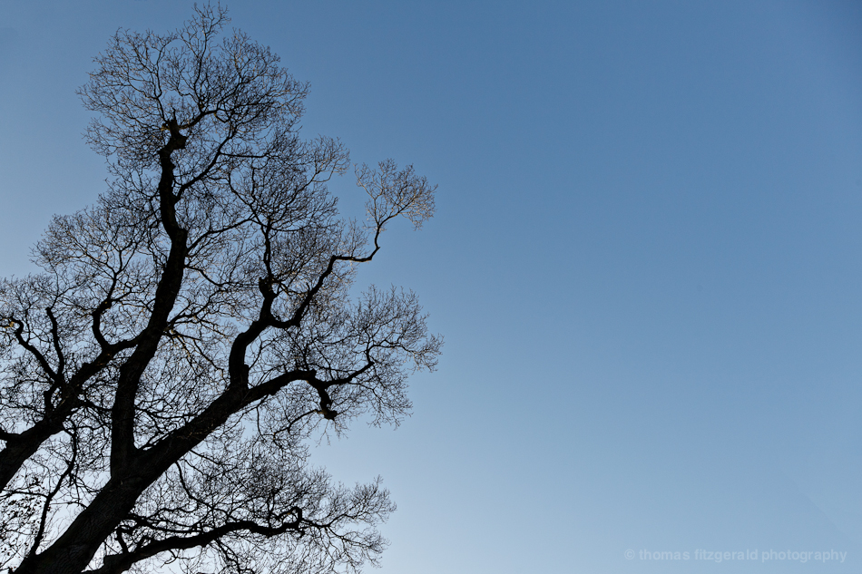 Winter Trees 6