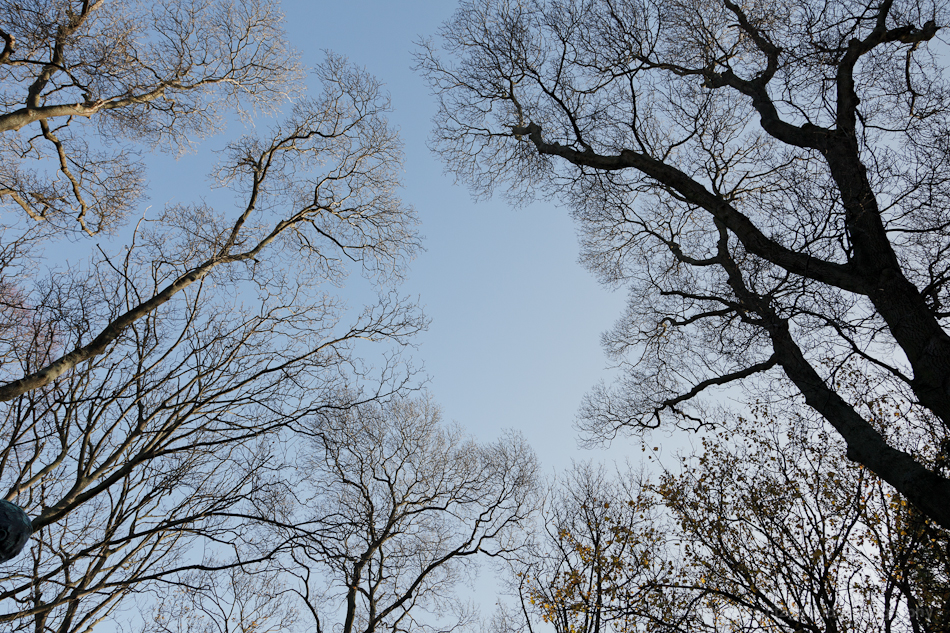 Winter Trees 7