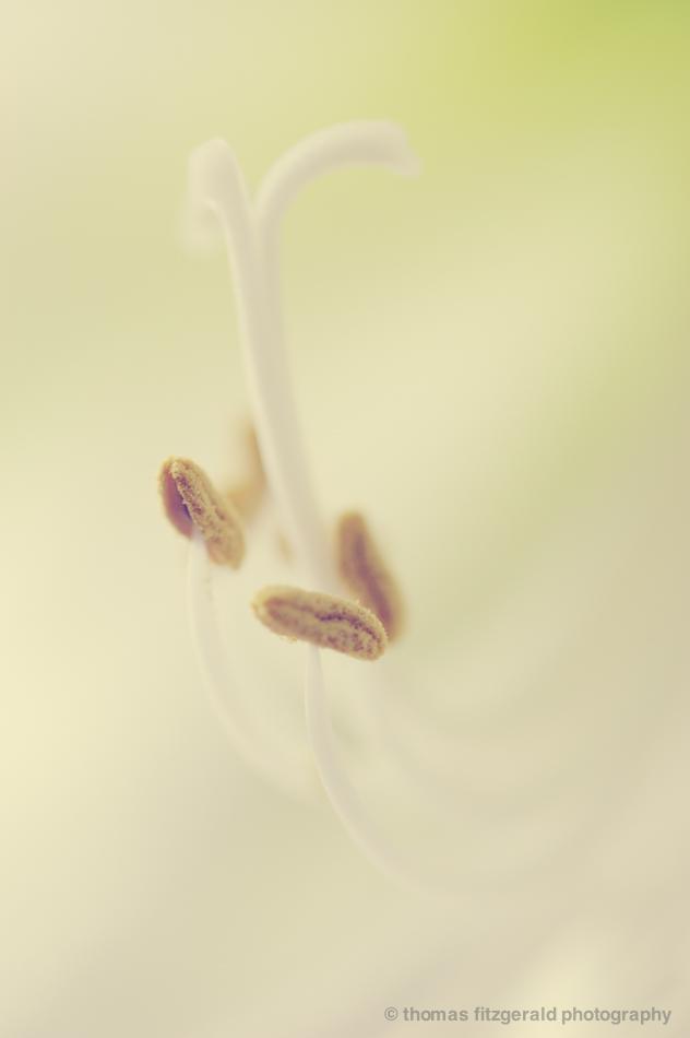 Stamen Closeup