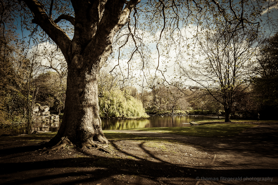 Trees in the Park, at St. Stephen's Green Dublin