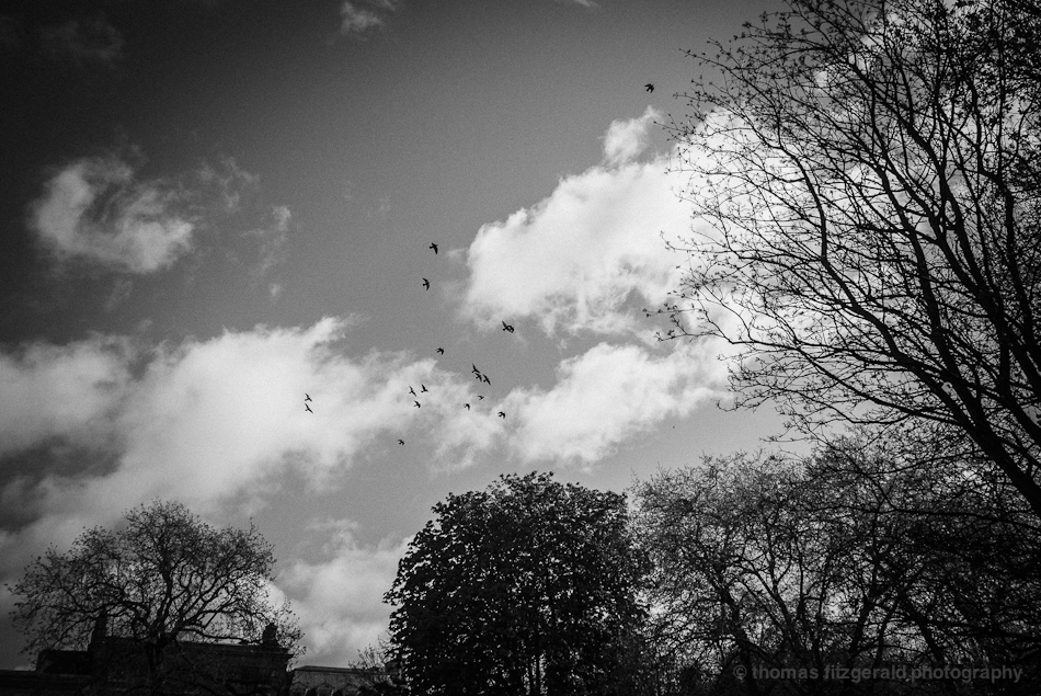 Birds flying in black and white