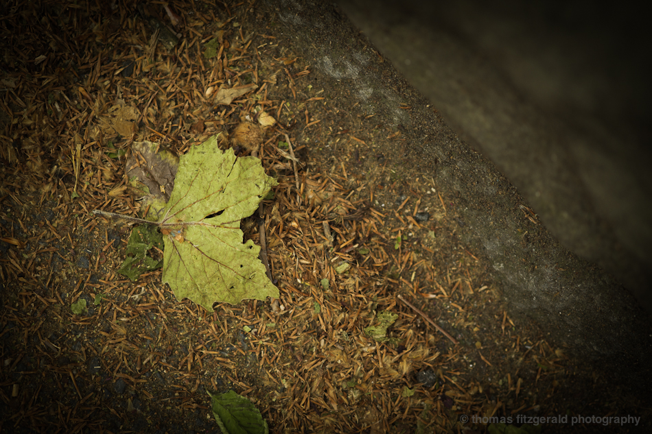 Fallen Leaf  - Fuji X-Pro1 and Fujinon 60mm