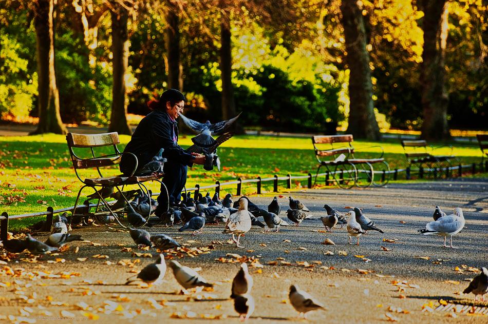 woman feeding pigeons