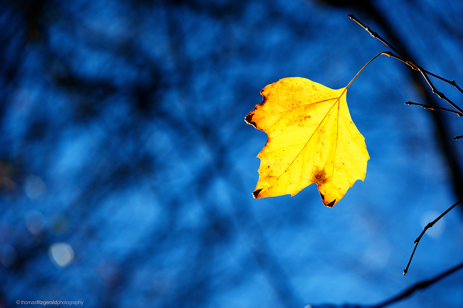 yellow leaf vivid