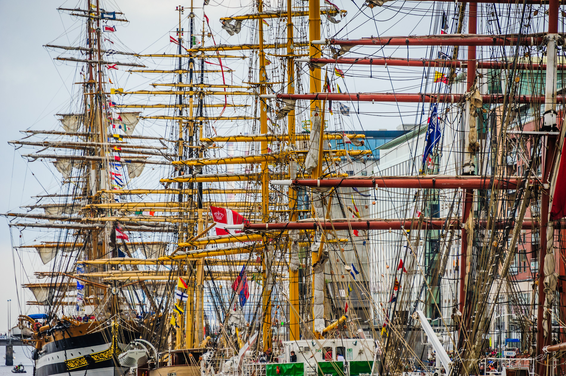 Masts of the Tall Ships
