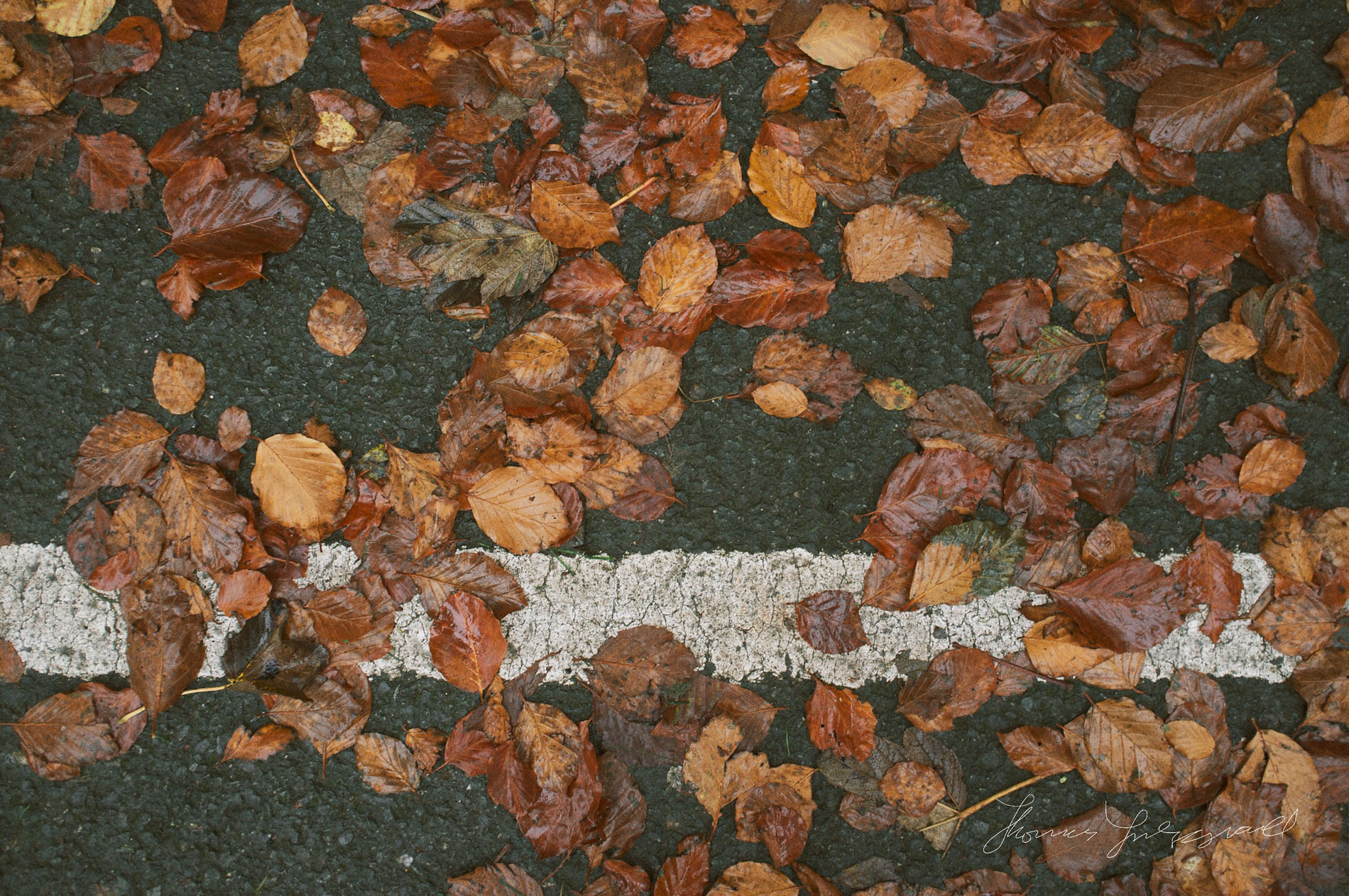 Double yellow lines in red leaf coat