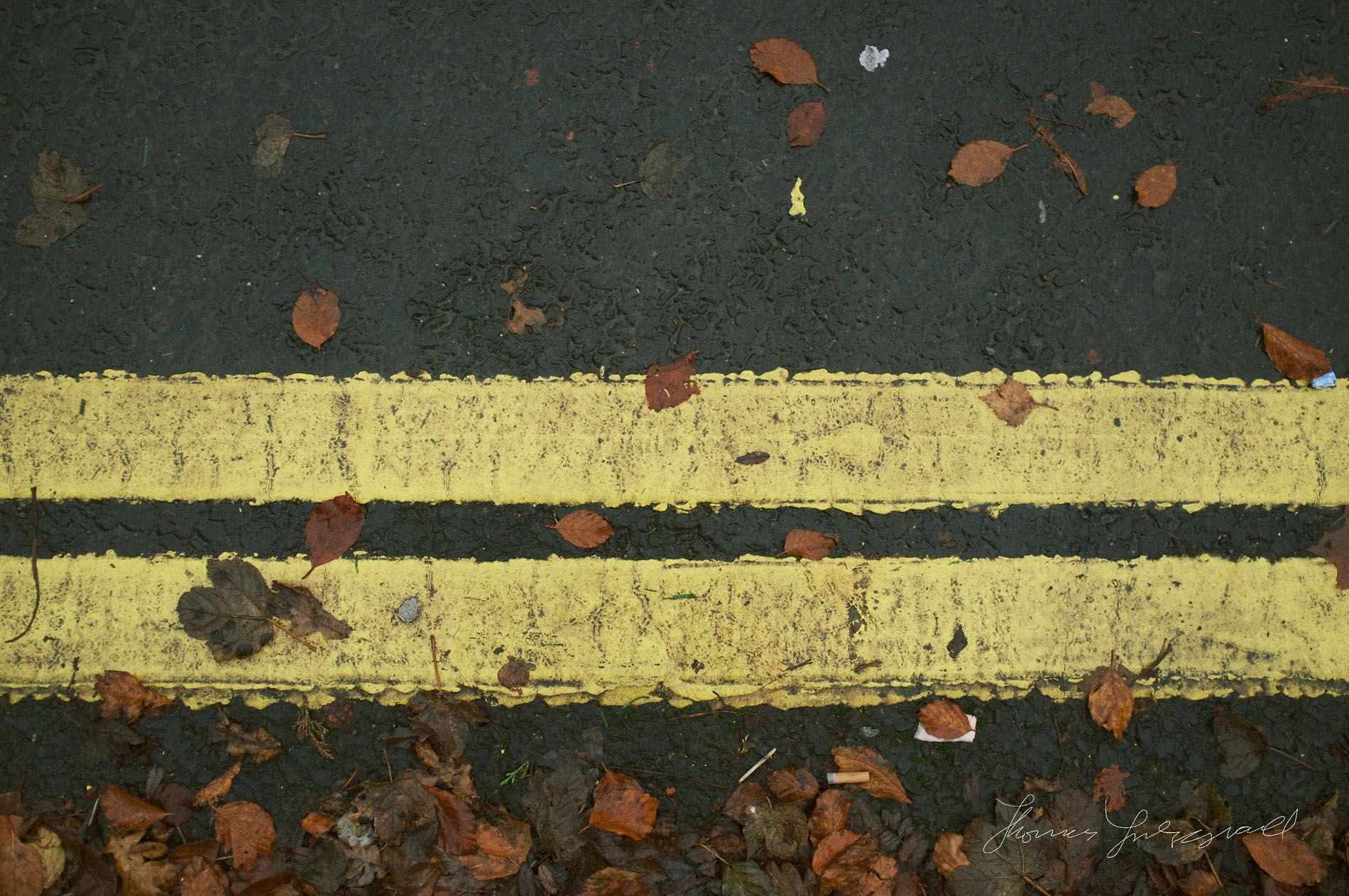Road markings and fallen leaves