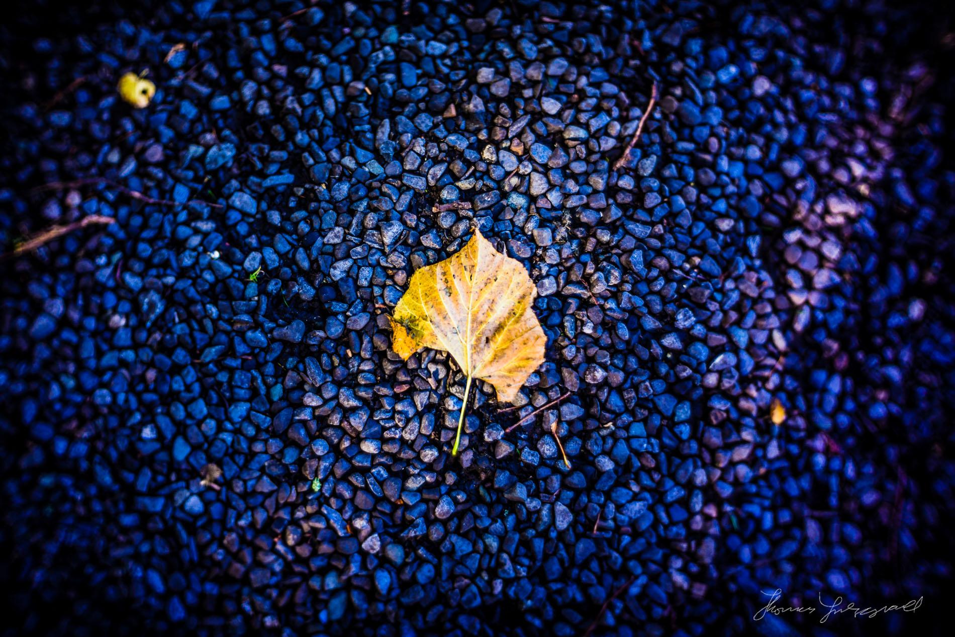 Golden Leaf with 35mm Slr Magic lens on Nex-7