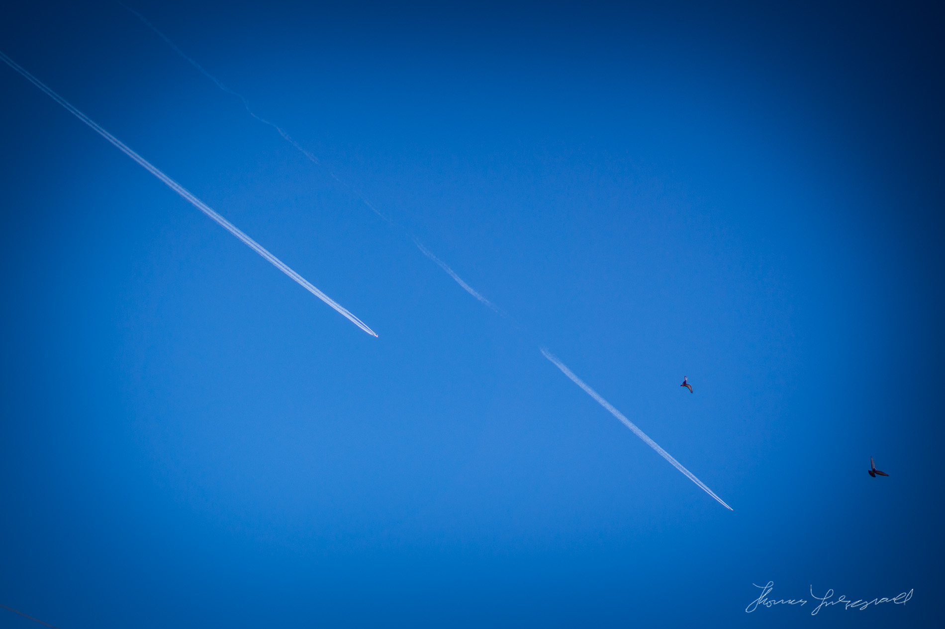Two planes streak acreoss the sky leaving jet trails as two pigeons stride to get out of the way