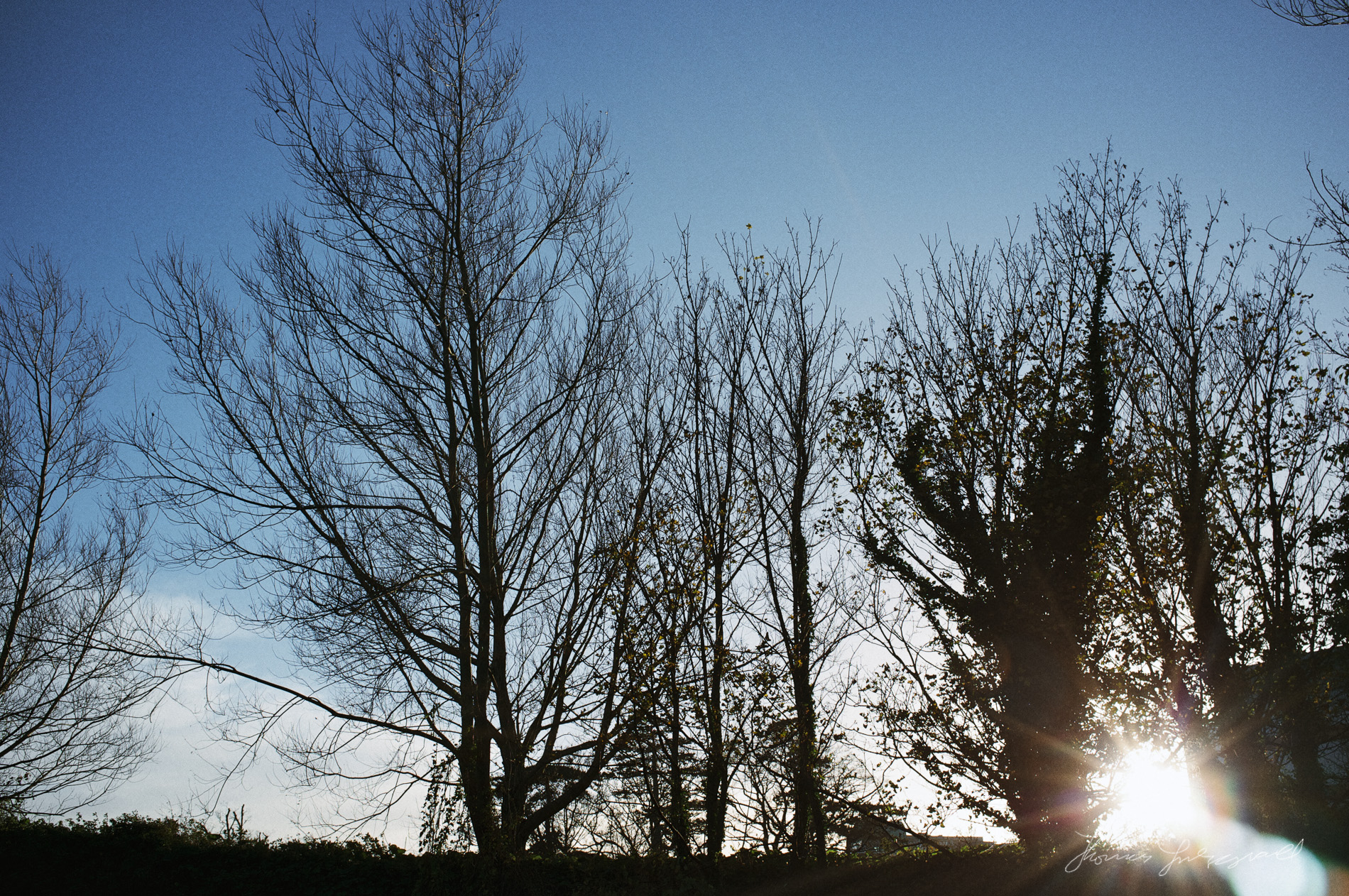 sun behind bare winter trees