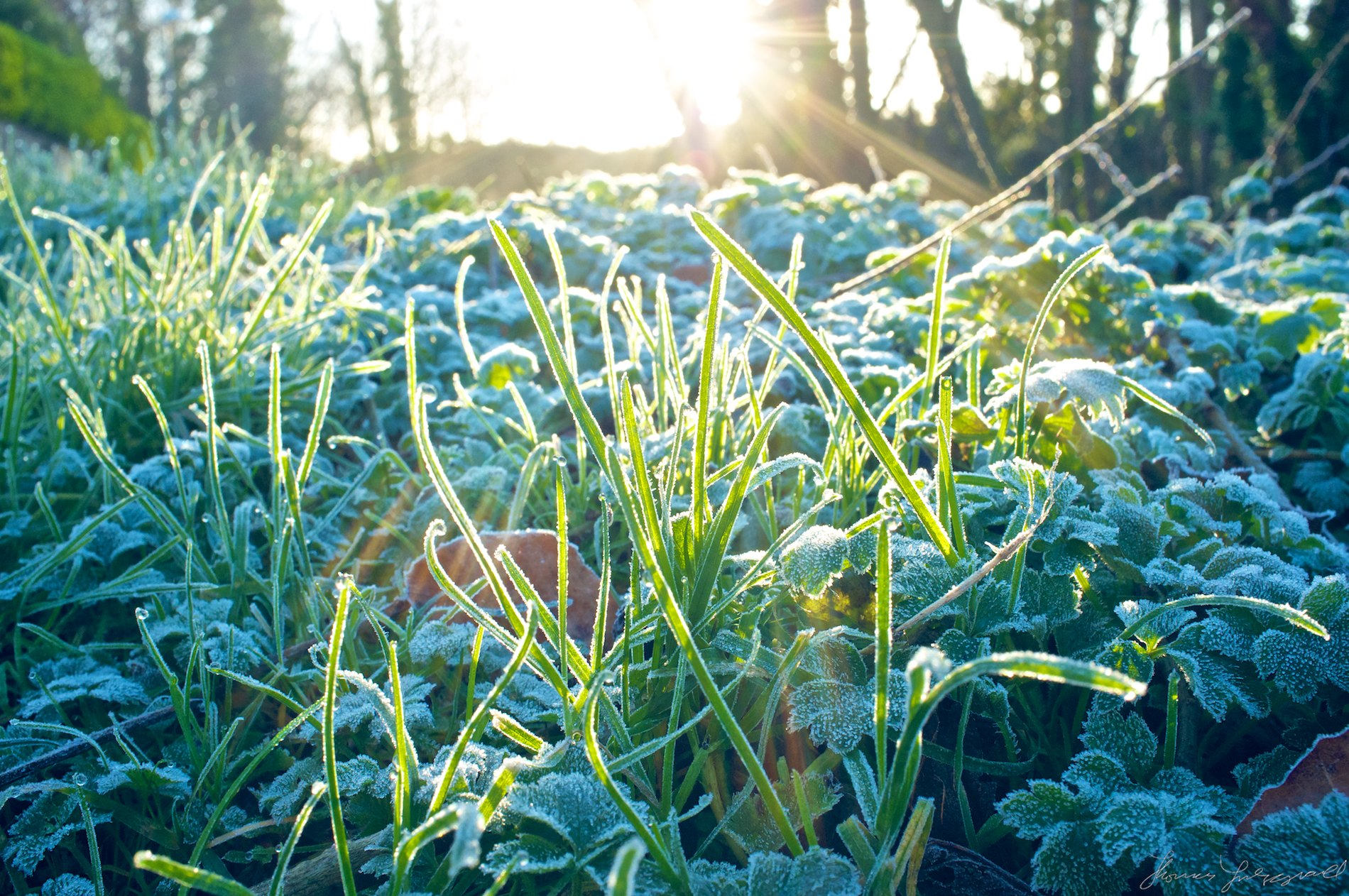 Fresh Frost in the Sunhine
