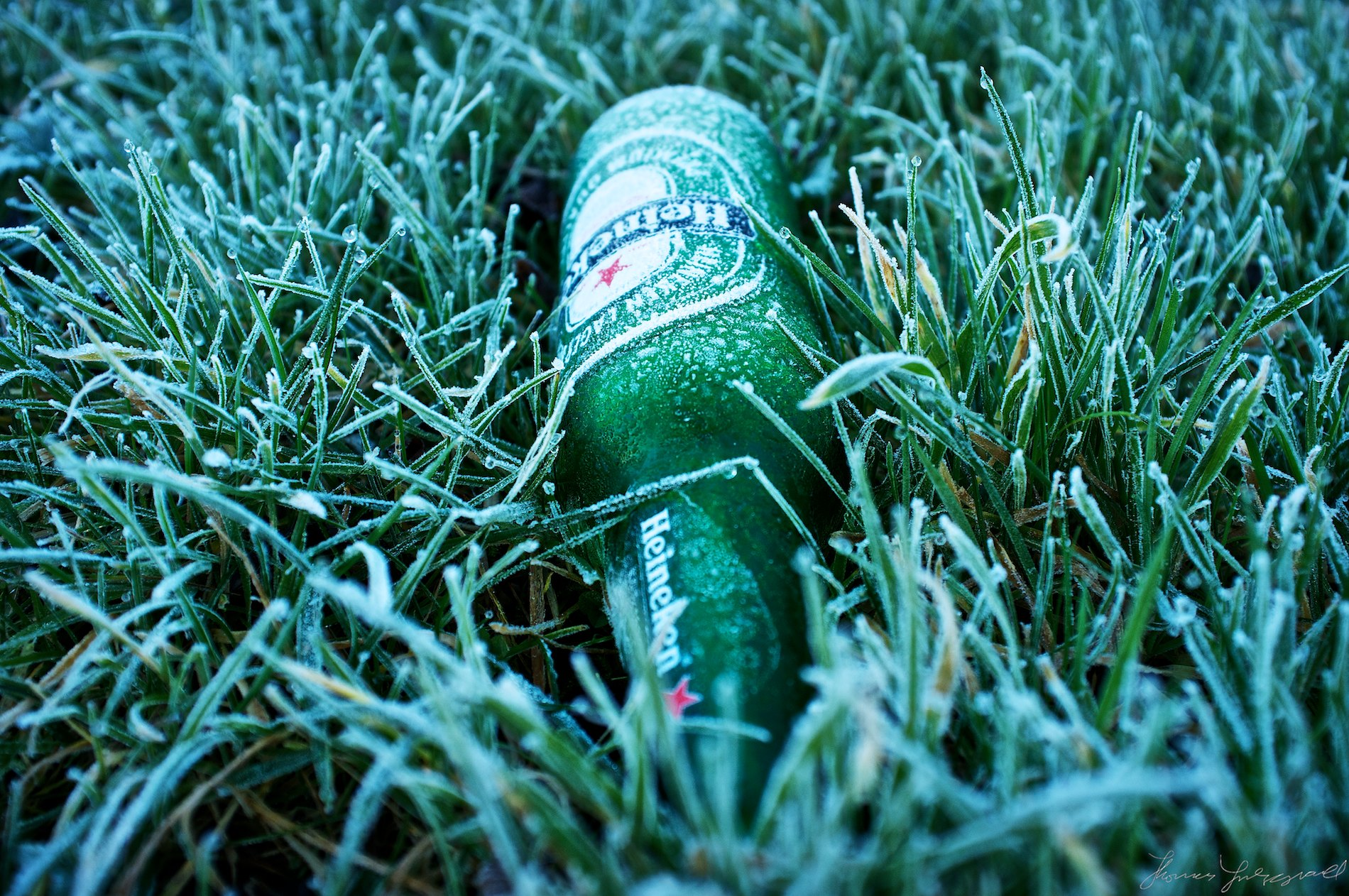 Heineken Bottle in the Frost