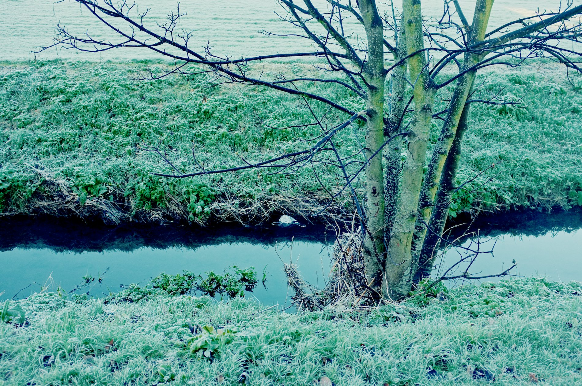 frost covered stream and tree