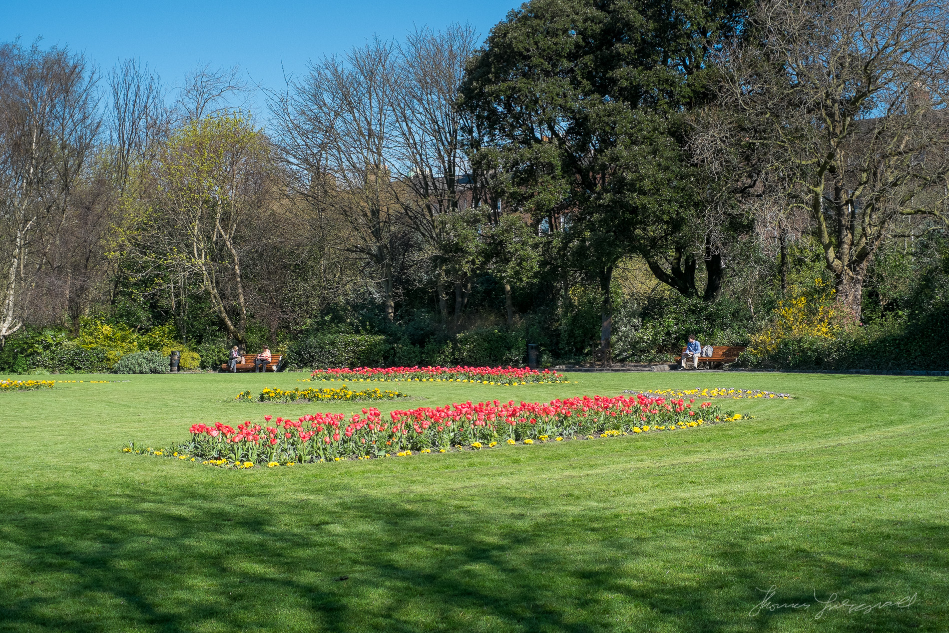 Flowers in Merrion Square