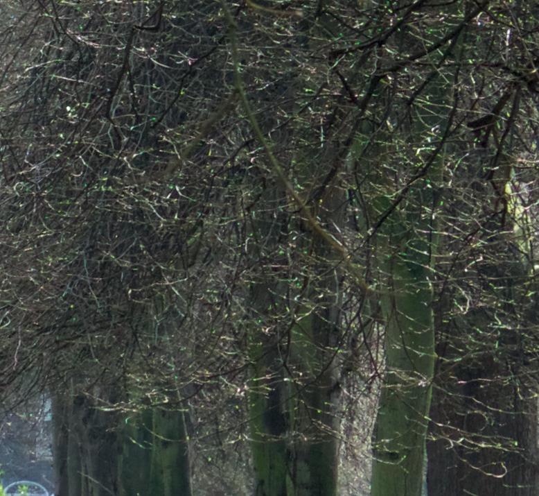 Trees ap
