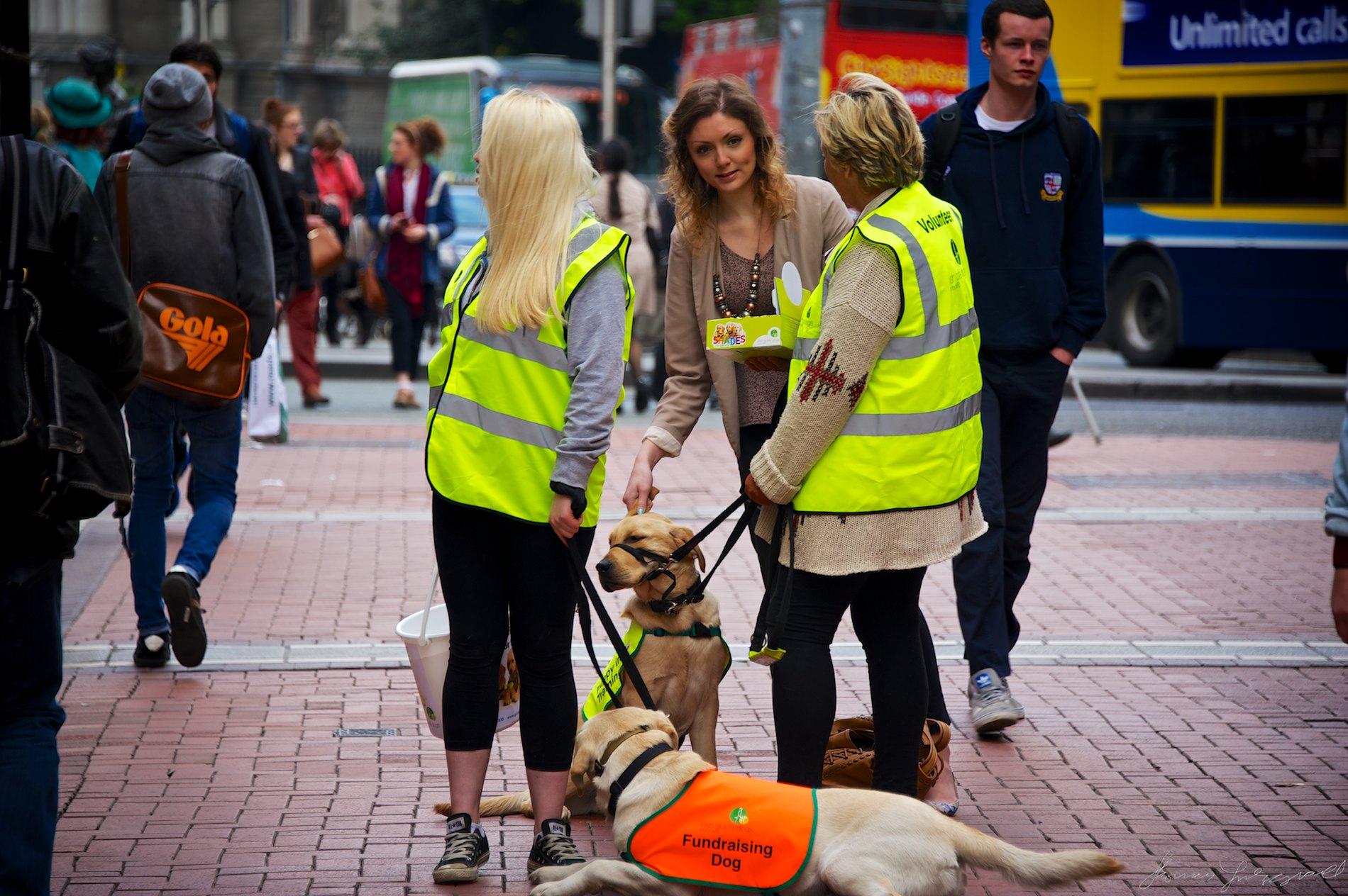 Fundraising Dog