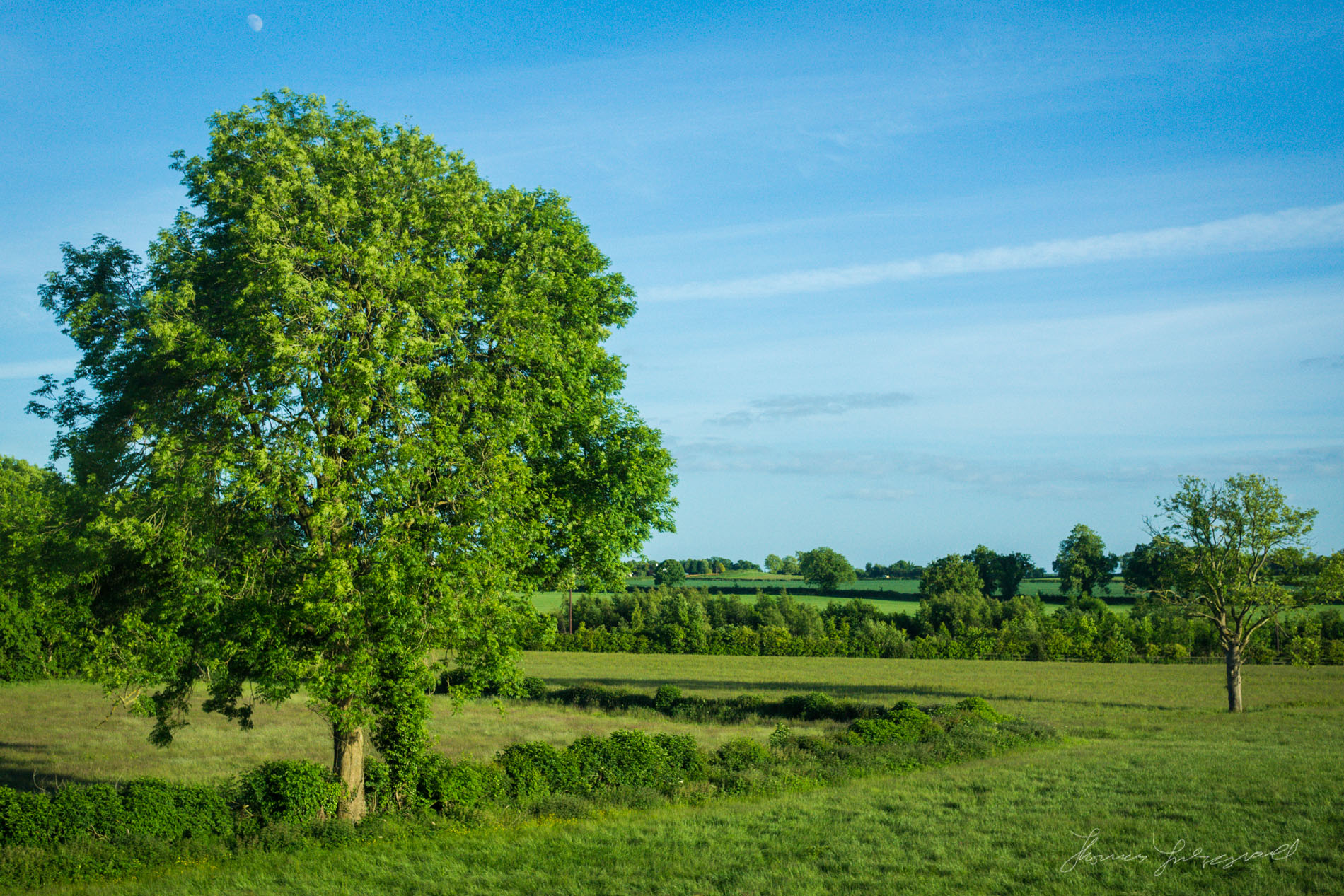 Big Tree in the Midands as seen from a Train