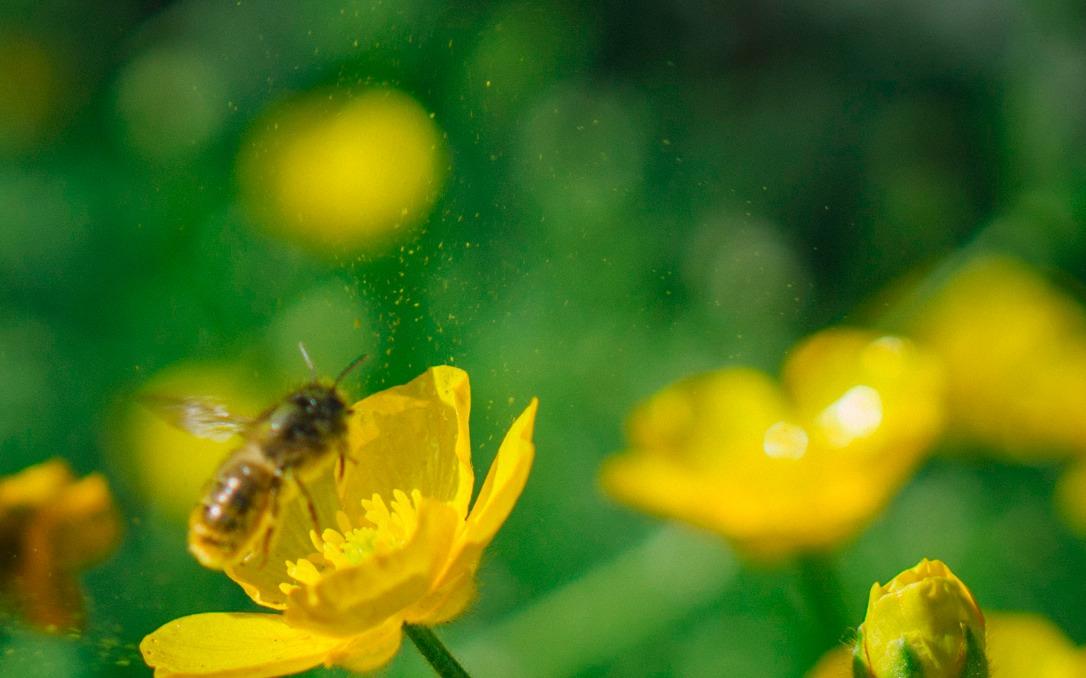 bee-crop