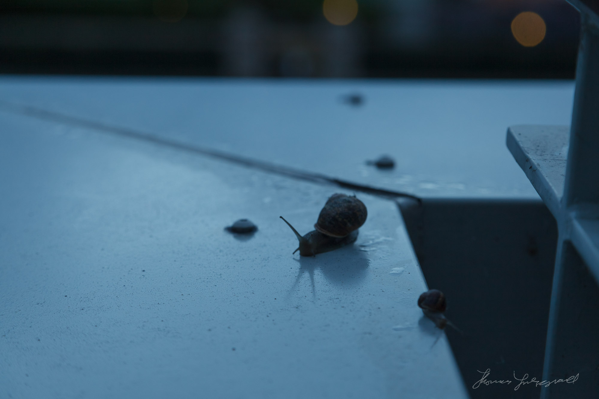 More Snails
