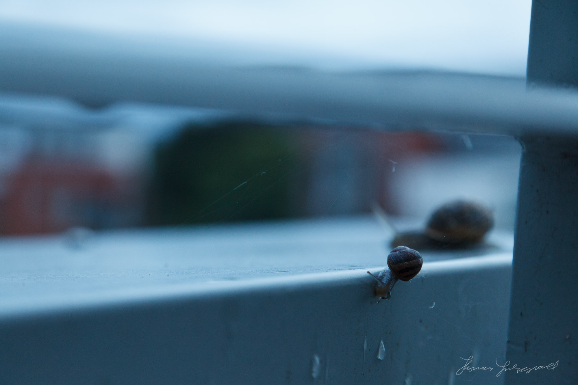 Snail on the edge