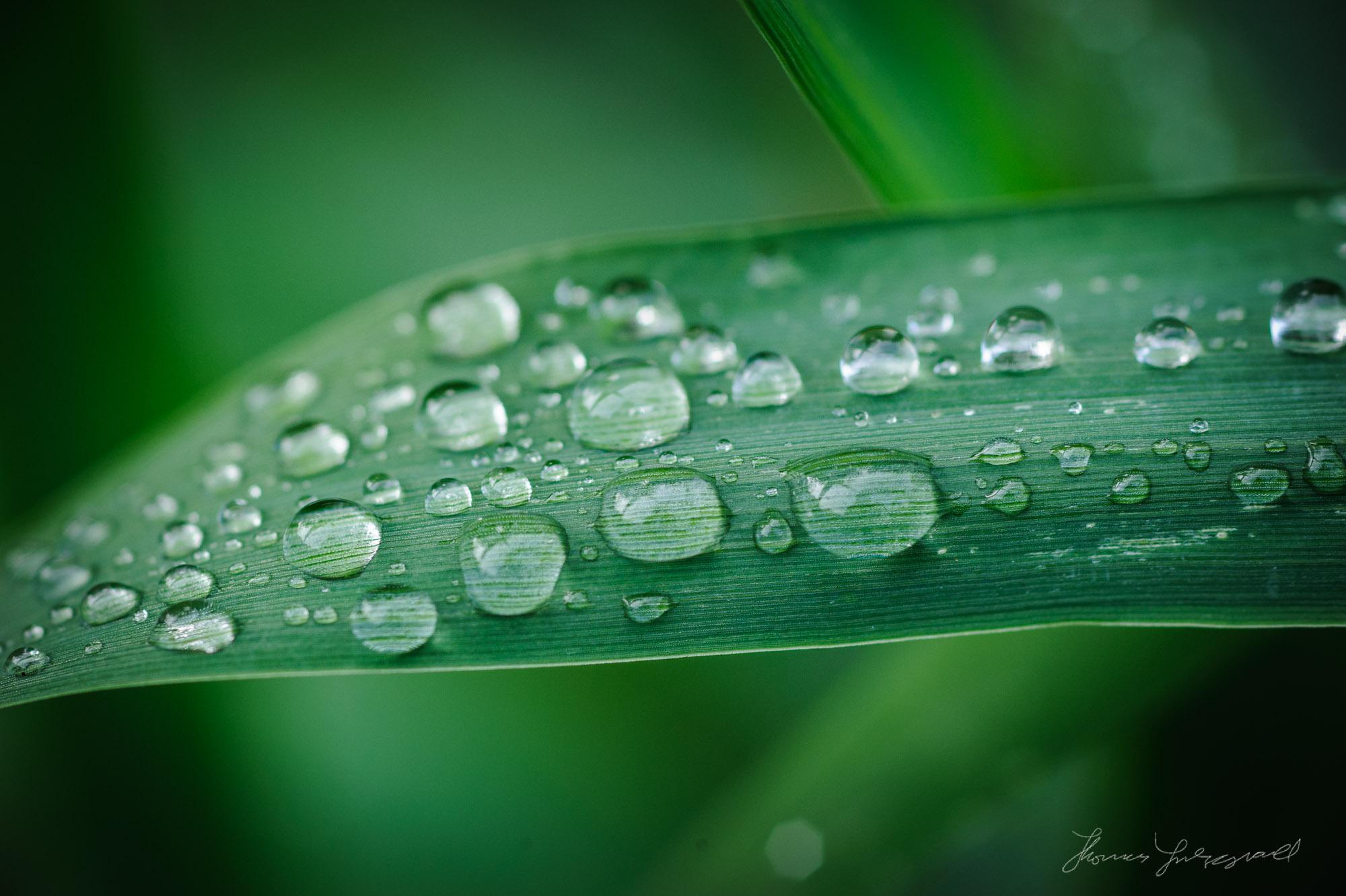 Raindrops Macro