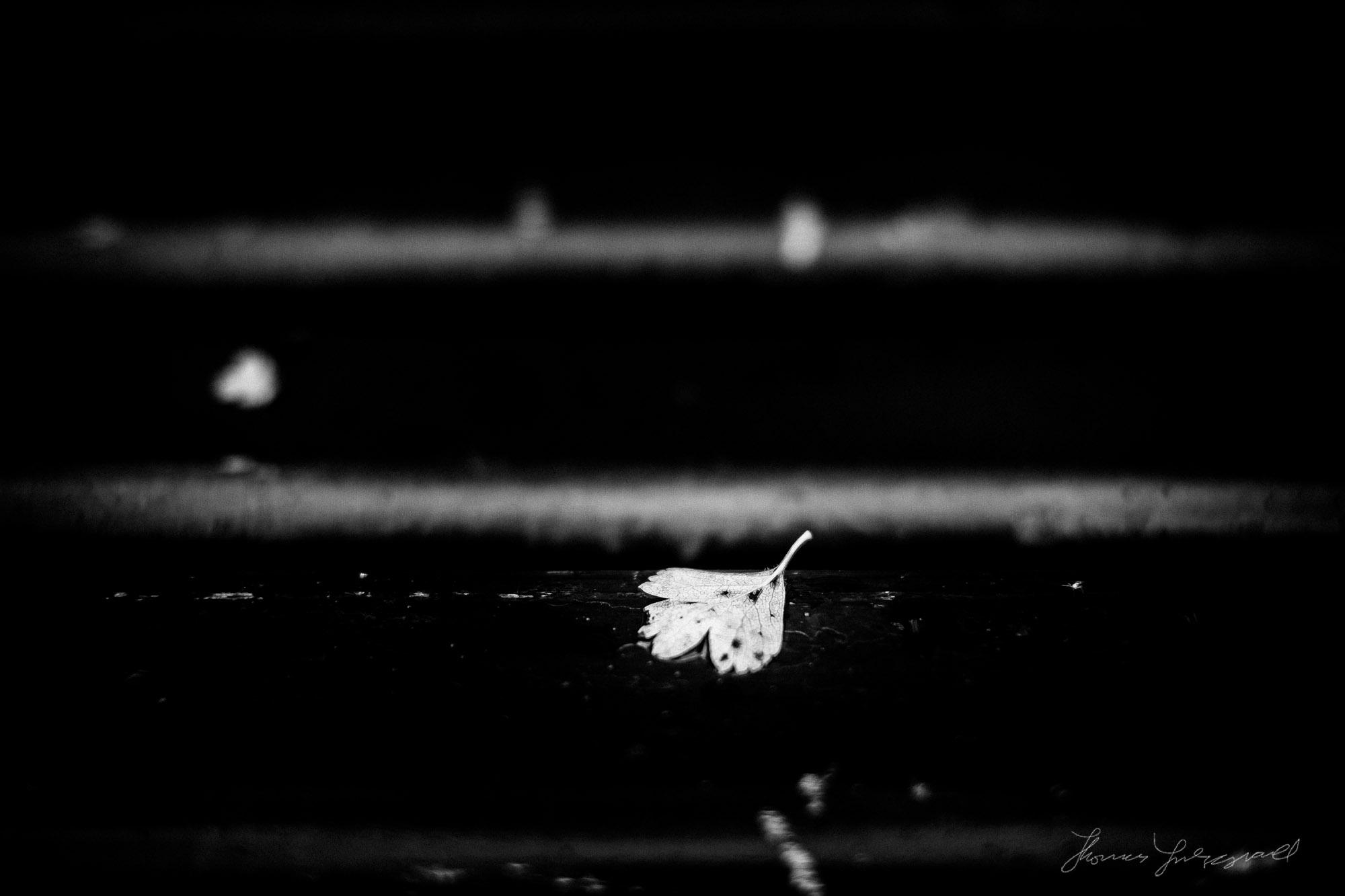 A lone leaf on a bench